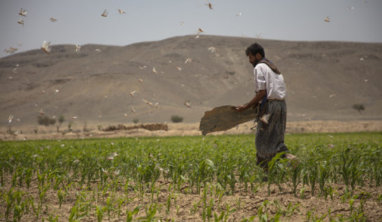 Five Years On, Saudi Attacks on Yemen's Farmers Are Pushing the Whole Country into Famine