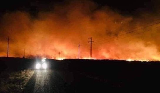 Turkish occupation deliberately burns wheat and barley fields in Abu Rasin area in Hasaka northern countryside
