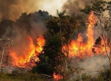 All it takes is a spark: Syrian wildfires turn olive trees into ashes