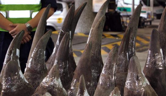 Hong Kong reclassifies wildlife trafficking as 'organized crime' in bid to crack down on illegal trade