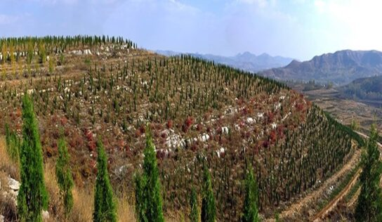 China to Plant 36,000 km2 of Forests Annually to Combat Climate Change