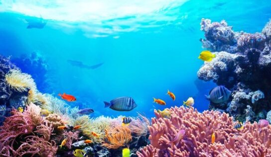 Planet Earth Loses Half Its Coral Reefs since 1950