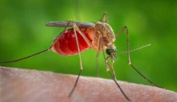 Mosquitoes Caught in Smart Traps