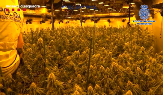 Multi-state agency Europol conducts mammoth drug bust in Spain, makes 107 arrests & seizes 51 cannabis farms (VIDEO)
